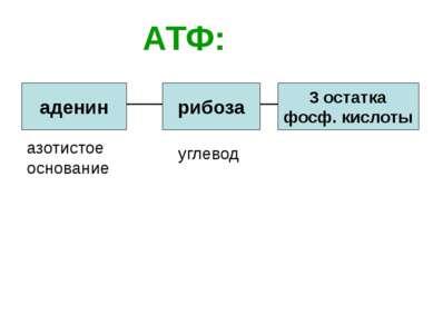 АТФ: аденин рибоза 3 остатка фосф. кислоты азотистое основание углевод
