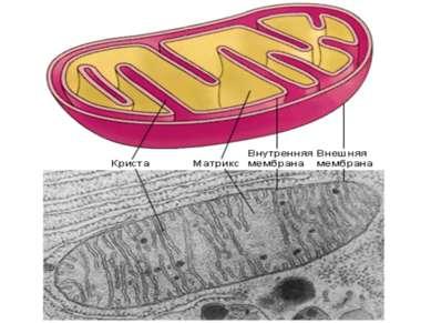 Условия: Участие ферментов Участие молекул-переносчиков Наличие кислорода Цел...
