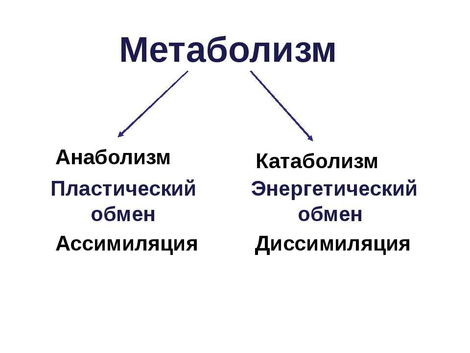 Метаболизм Пластический обмен Ассимиляция Анаболизм Энергетический обмен Дисс...