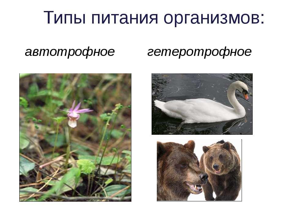 гетеротрофное автотрофное Типы питания организмов: