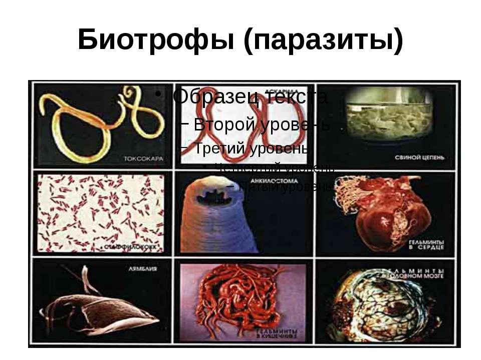 Биотрофы (паразиты)