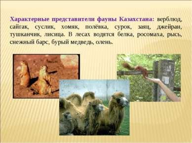 Характерные представители фауны Казахстана: верблюд, сайгак, суслик, хомяк, п...