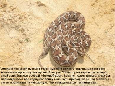 Змеям в песчаной пустыне тоже неудобно ползать обычным способом: извивающемус...