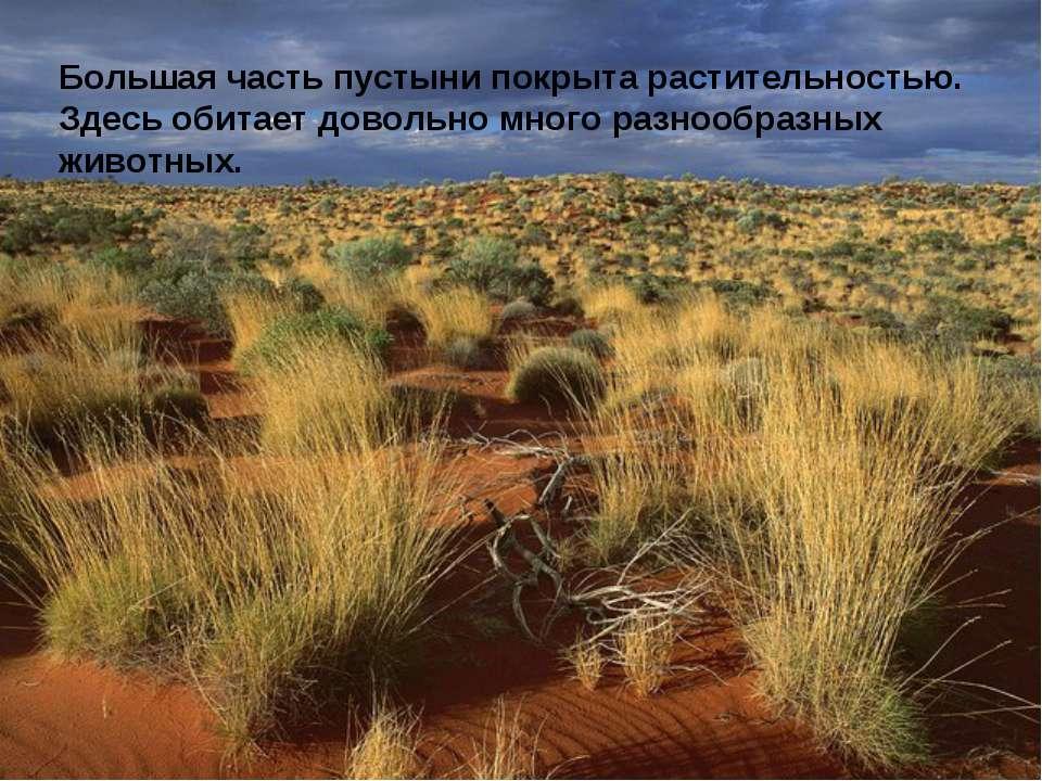 Большая часть пустыни покрыта растительностью. Здесь обитает довольно много р...