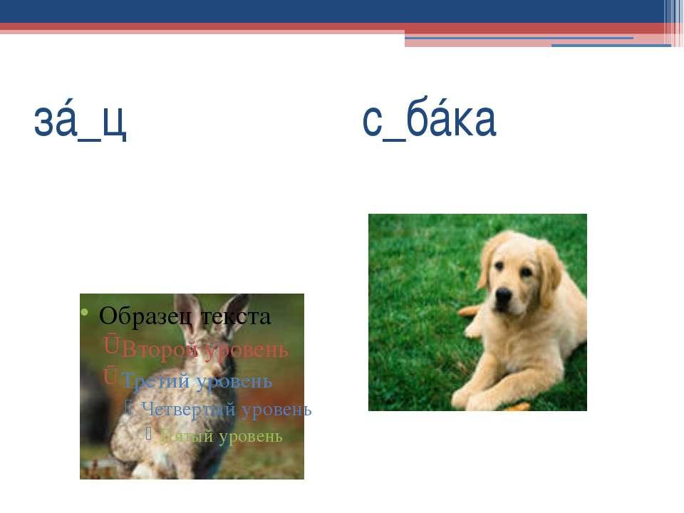 зá_ц с_бáка