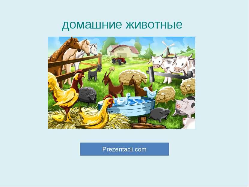 домашние животные Prezentacii.com