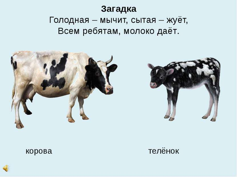 Загадка Голодная – мычит, сытая – жуёт, Всем ребятам, молоко даёт. корова тел...