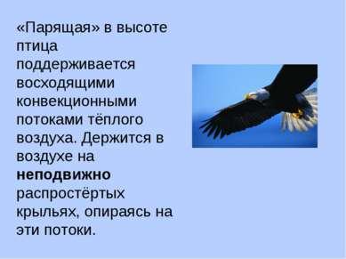 «Парящая» в высоте птица поддерживается восходящими конвекционными потоками т...