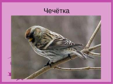 Чечётка
