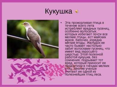 Кукушка Эта прожорливая птица в течение всего лета истребляет вредных гусениц...