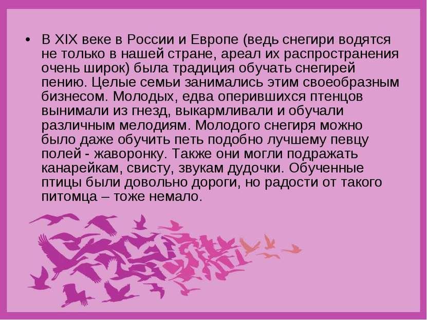 В XIX веке в России и Европе (ведь снегири водятся не только в нашей стране, ...