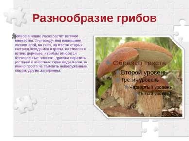 Разнообразие грибов Грибов в наших лесах растёт великое множество. Они всюду-...