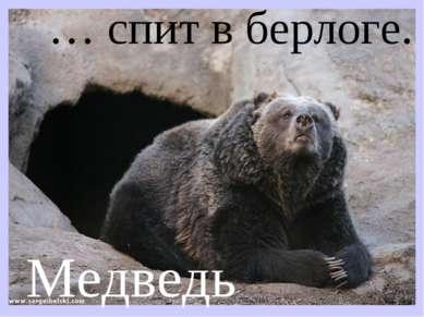 … спит в берлоге. Медведь