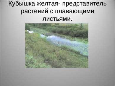 Кубышка желтая- представитель растений с плавающими листьями.