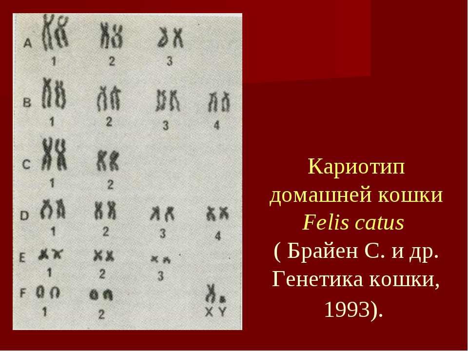 Кариотип домашней кошки Felis catus ( Брайен С. и др. Генетика кошки, 1993).