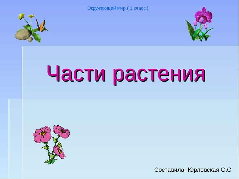 Части растения Окружающий мир ( 1 класс ) Cоставила: Юрловская О.С