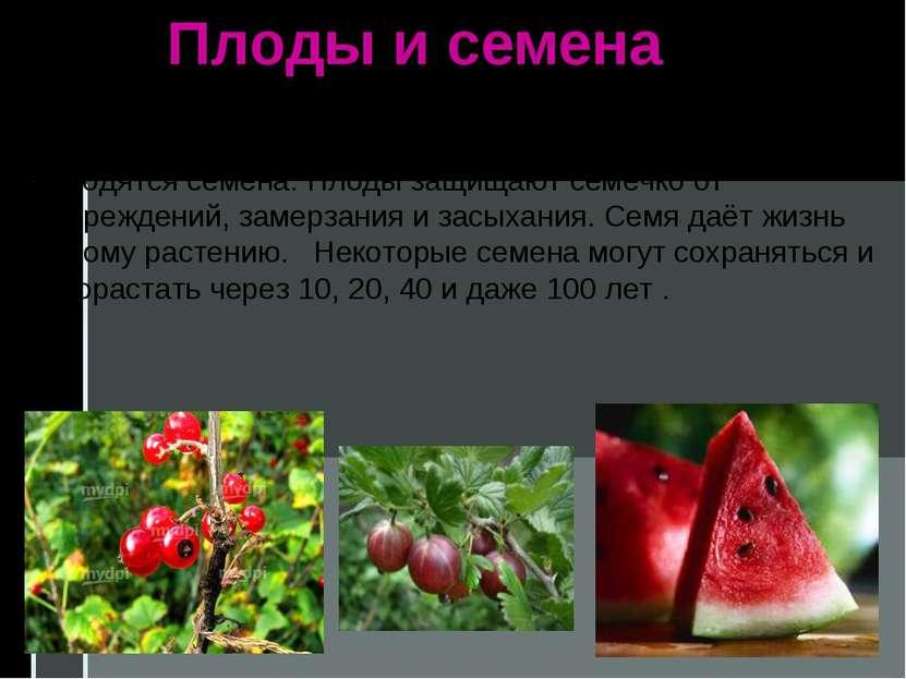 Плоды и семена Плоды разных растений непохожи между собой, но они всегда обра...