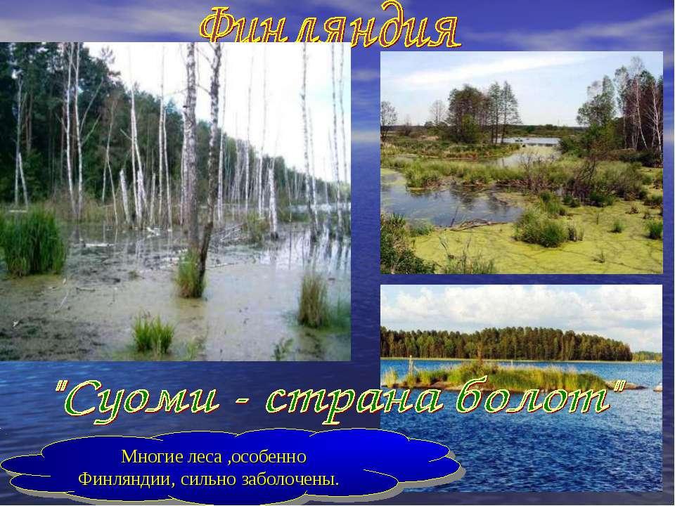 Многие леса ,особенно Финляндии, сильно заболочены.