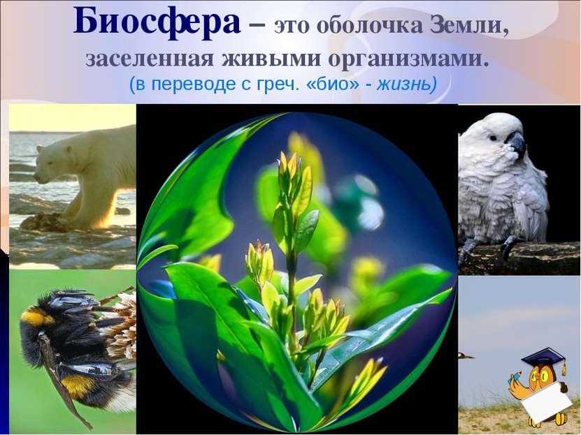 Биосфера – это оболочка Земли, заселенная живыми организмами. (в переводе с г...