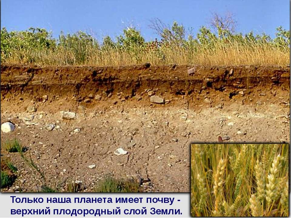 Только наша планета имеет почву - верхний плодородный слой Земли.