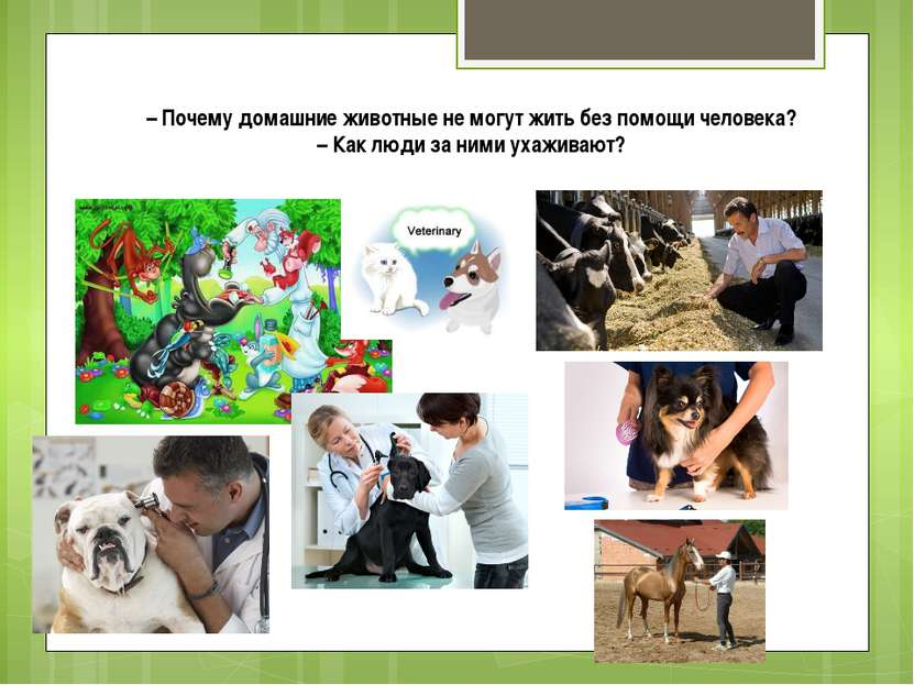 – Почему домашние животные не могут жить без помощи человека? – Как люди за н...