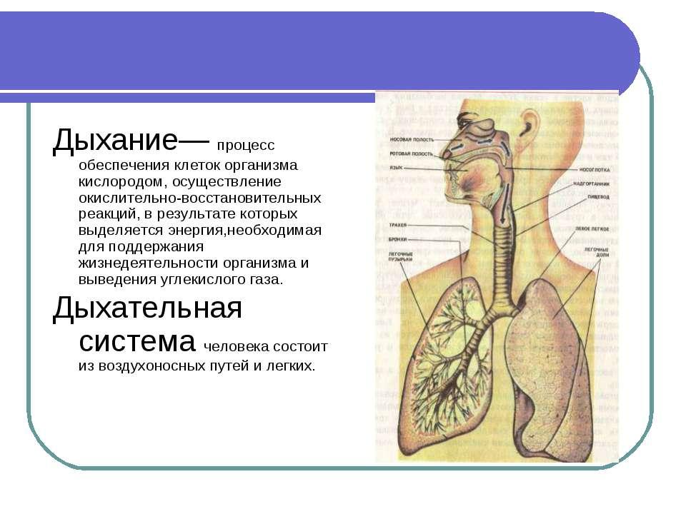 Дыхание— процесс обеспечения клеток организма кислородом, осуществление окисл...