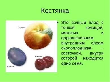 Костянка Это сочный плод с тонкой кожицей, мякотью и одревесневшим внутренним...