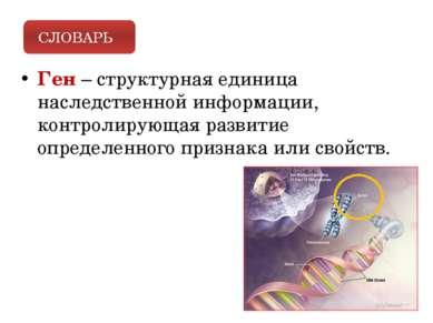 Ген – структурная единица наследственной информации, контролирующая развитие ...