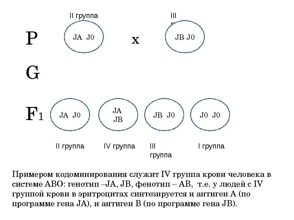 Примером кодоминирования служит IV группа крови человека в системе АВО: генот...