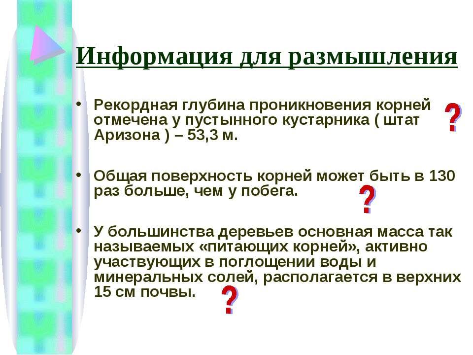 Информация для размышления Рекордная глубина проникновения корней отмечена у ...