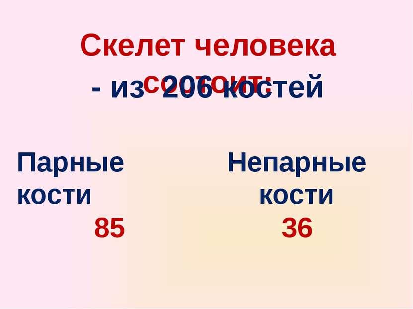Скелет человека состоит: - из 206 костей Парные кости 85 Непарные кости 36