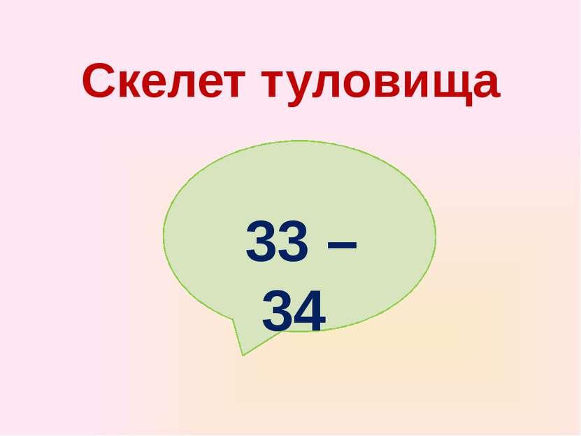Скелет туловища 33 – 34