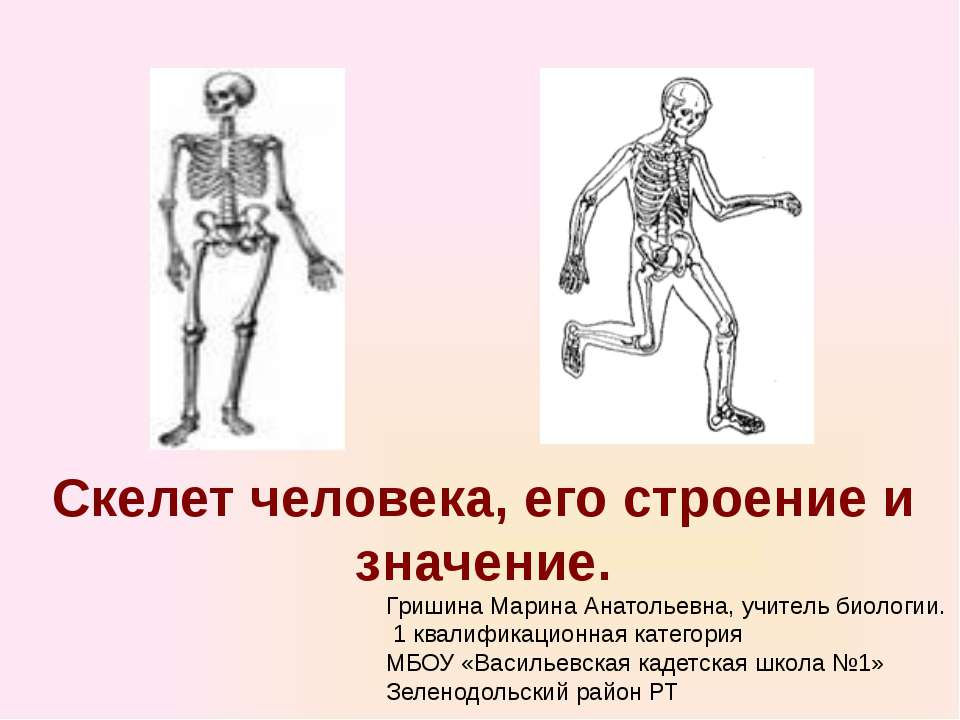 Скелет человека, его строение и значение. Гришина Марина Анатольевна, учитель...