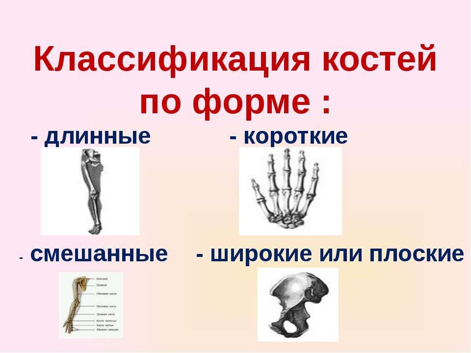 Классификация костей по форме : - длинные - короткие - широкие или плоские - ...
