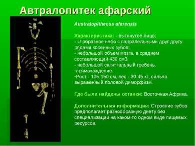 Автралопитек афарский Australopithecus afarensis Характеристика: - вытянутое ...