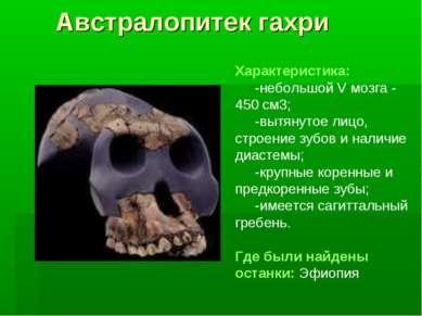 Австралопитек гахри Характеристика: -небольшой V мозга - 450 см3; -вытянутое ...