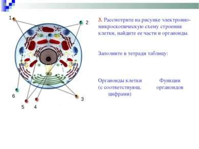 3 1 2 4 5 6 3. Рассмотрите на рисунке электронно-микроскопическую схему строе...
