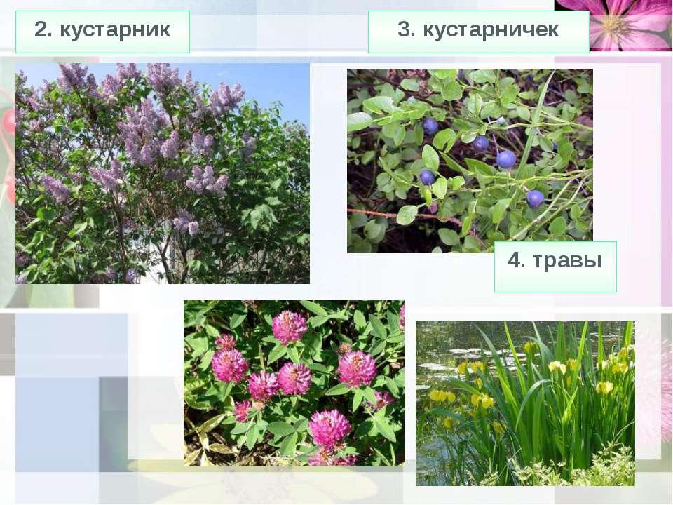 2. кустарник 3. кустарничек 4. травы