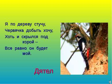 Дятел Я по дереву стучу, Червячка добыть хочу, Хоть и скрылся под корой – Все...
