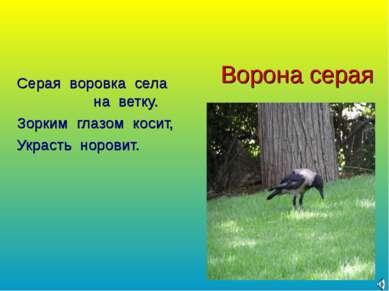 Ворона серая Серая воровка села на ветку. Зорким глазом косит, Украсть норовит.