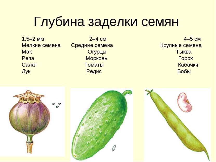 Глубина заделки семян 1,5–2 мм 2–4 см 4–5 см Мелкие семена Средние семена Кру...
