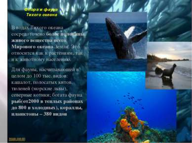Флора и фауна Тихого океана В водах Тихого океана сосредоточено более половин...