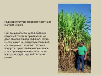 Родиной культуры сахарного тростника считают Индию При рациональном использов...
