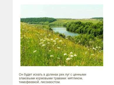 Он будет искать в долинах рек луг с ценными злаковыми кормовыми травами: мятл...