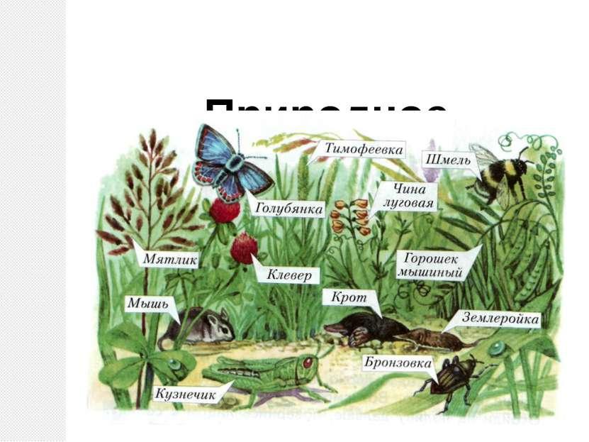 Природное сообщество – луг