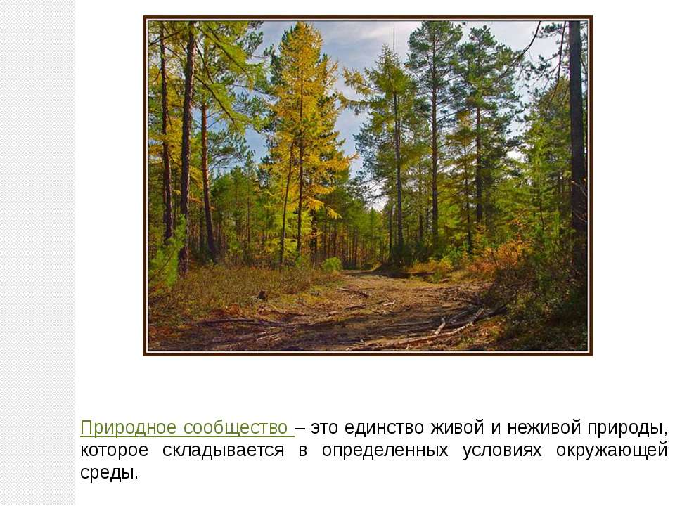 картинке природное сообщество в