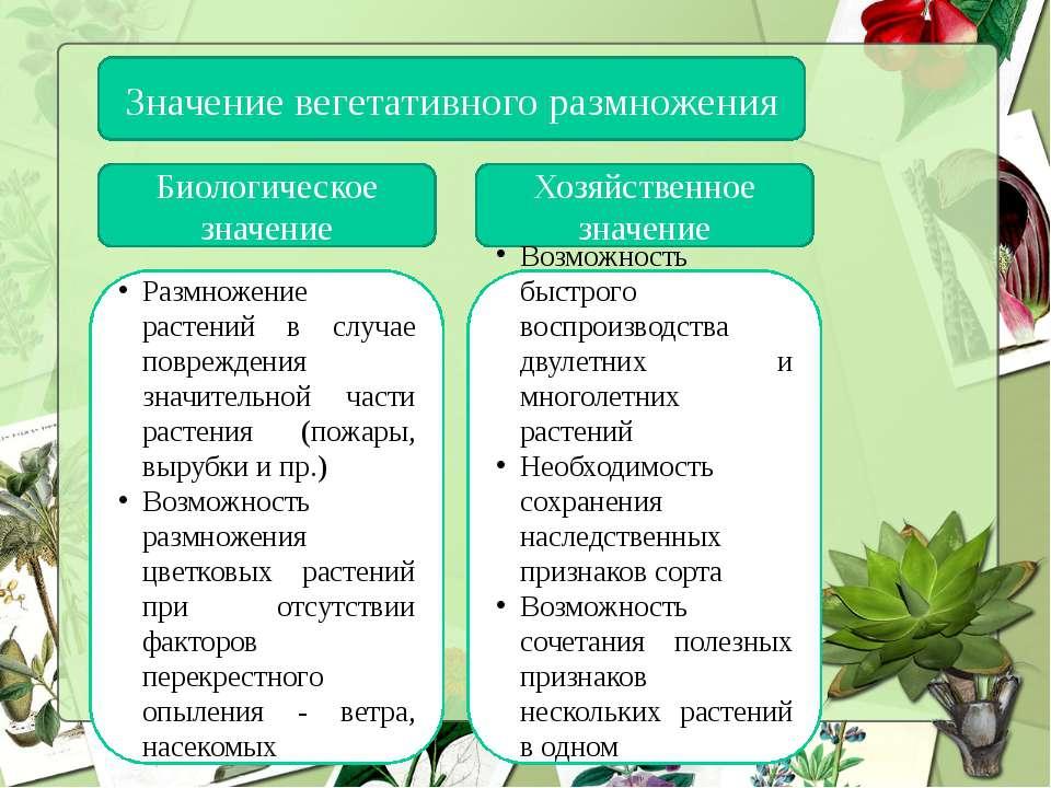 Значение вегетативного размножения Биологическое значение Хозяйственное значе...