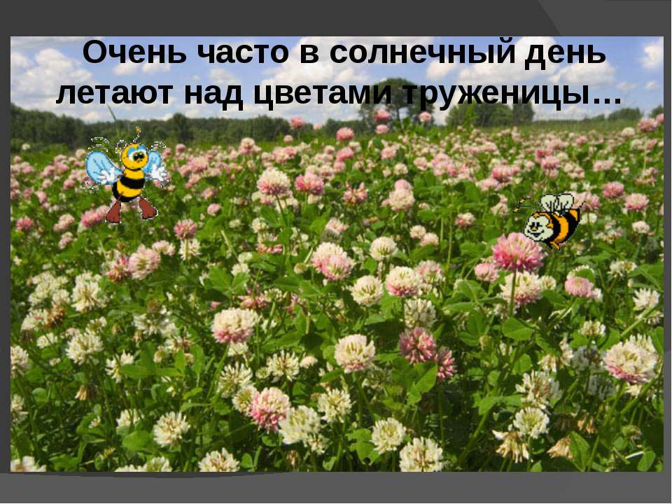 Очень часто в солнечный день летают над цветами труженицы…