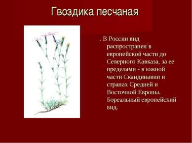Гвоздика песчаная . В России вид распространен в европейской части до Северно...