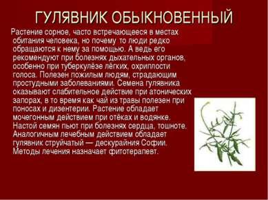 ГУЛЯВНИК ОБЫКНОВЕННЫЙ Растение сорное, часто встречающееся в местах обитания ...